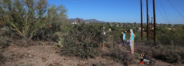 tumamoc revisting volunteers ecology monitor